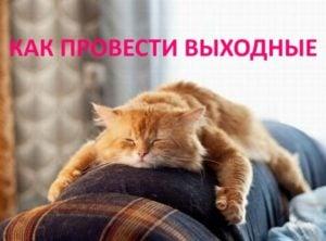 Провести выходные одинокому